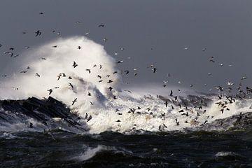 Meeuwen boven de pier van IJmuiden van Menno van Duijn