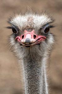 Struisvogel portret van Marjolein van Middelkoop