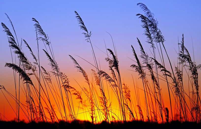 Morning in Africa van W. Woyke