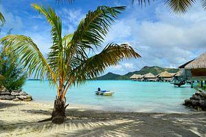 Luxe resort met strand en palmboom op Bora Bora