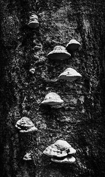 Paddenstoelen op een boom van Goud Vis