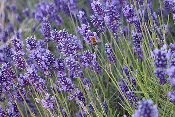 Bij Op Lavendel van Rosalie Broerze