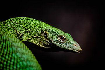 Grünes Reptil von Jaimy van Asperen