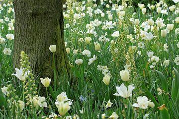 Witte bloemen sur Antwan Janssen