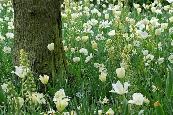 Witte bloemen van Antwan Janssen