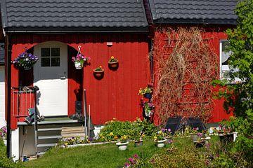 Im rauhen Sommer Lapplands von Gisela Scheffbuch