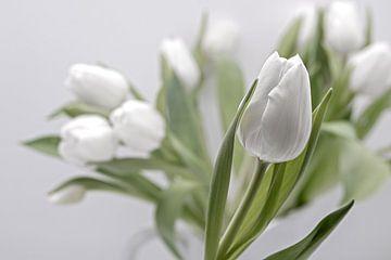 witte tulpen van Anneliese Grünwald-Märkl