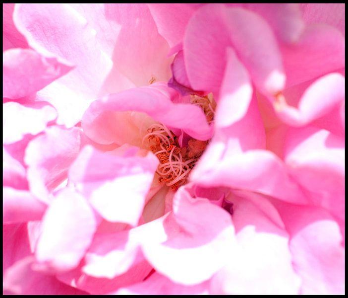 Bloemen van Anuska Klaverdijk