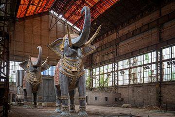 verlaten olifanten van Kristof Ven