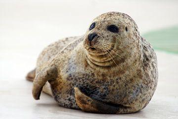 zeehond van Dirk van Egmond