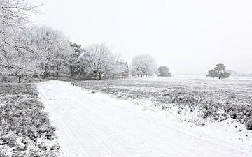Severe Frost van