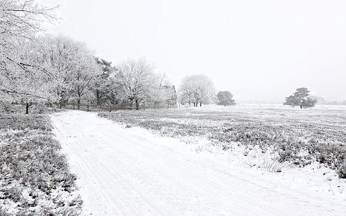 Severe Frost van Gisela Scheffbuch