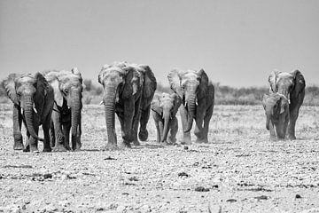 Elephants at Etosha National Park van Jurgen Hermse
