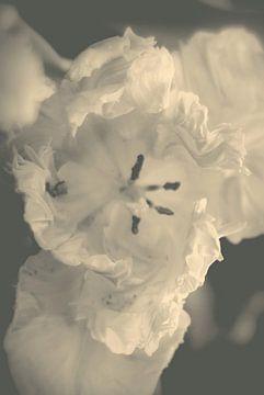 Tulp tutu van Marianna Pobedimova