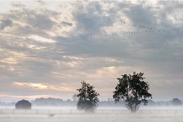 Dichte mist over de velden van Atelier van Saskia