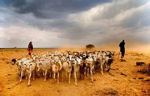 Masaai Shepherds van Johan Ensing