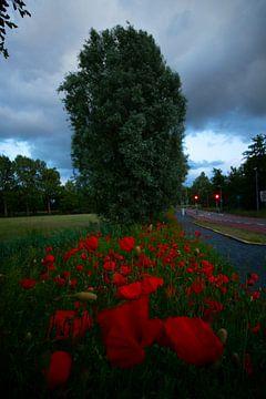 Entlang der Straße von Peter Heins