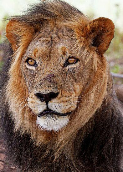 The Lion van W. Woyke