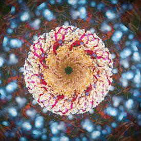 L'absorption multiple d'un champignon sur René van der Horst