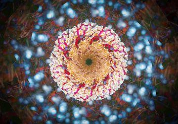 Mehrfache Aufnahme eines Pilzes von René van der Horst