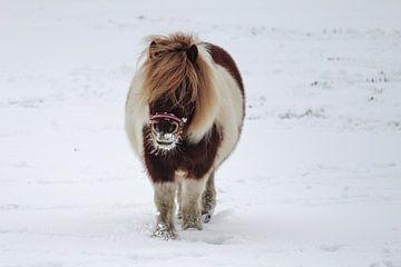 Pony im Schnee von Tessa Dommerholt
