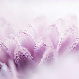 Pink Dahlia van Sense Photography