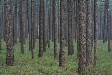 a forest van joas wilzing