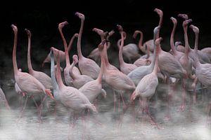 Flamingos im Nebel von Rob De Jong