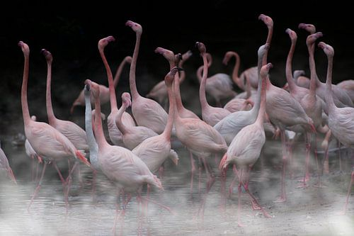 Flamingo's in the mist