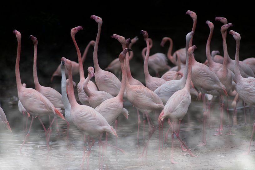 Flamingo's in the mist van Rob De Jong