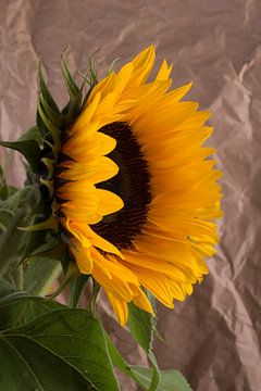 Zonnebloemen 1 von Joke Beers-Blom