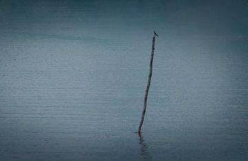 Einsame blaue Schwalbe, die wartet, um zu jagen von Castro Sanderson