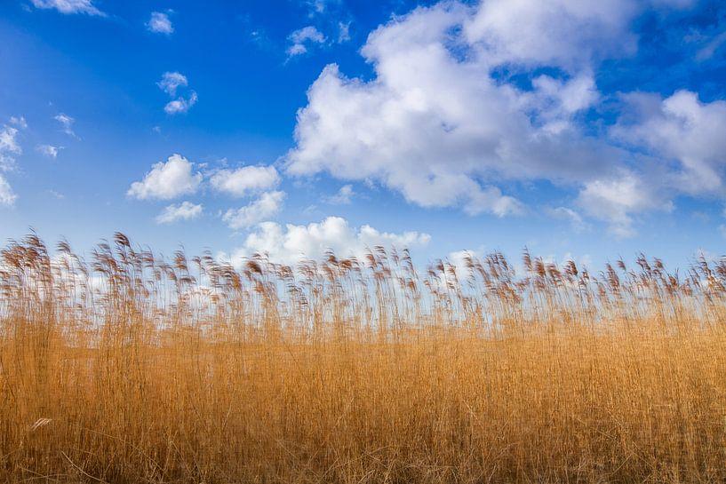 Goud gele riet halmen tegen een Hollandse bewolkte lucht. One2expose Wout Kok Photography.  van Wout Kok