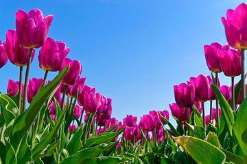 Roze en blauw van Wijnand Medendorp