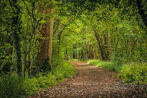 Fussweg durch den Wald