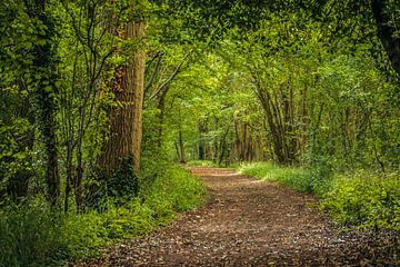 Fussweg durch den Wald von Rietje Bulthuis