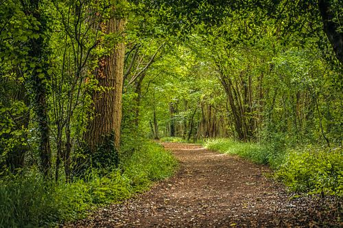 wandelpad door het bos