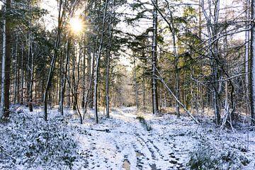 Bos in Drenthe op een winterse dag met zon van Laura Weemering