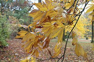Close up van de gele bladeren van een boom van Audrey Nijhof