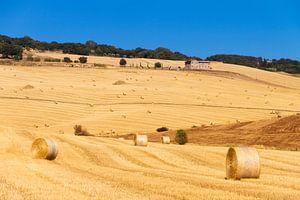 Landschap van Toscane van