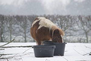 pony in de sneeuw