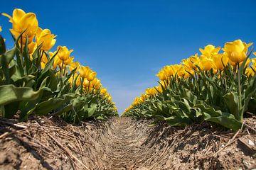Gele tulpen tegen een blauwe lucht van Ad Jekel