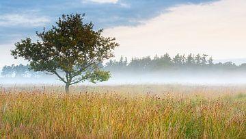 Wunderschönes Doldersummer-Feld von Mark van der Walle