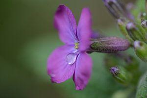 wenende bloem