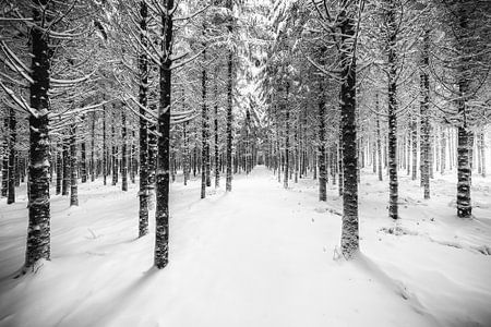 Sneeuw, bos en schaduw in zwart wit