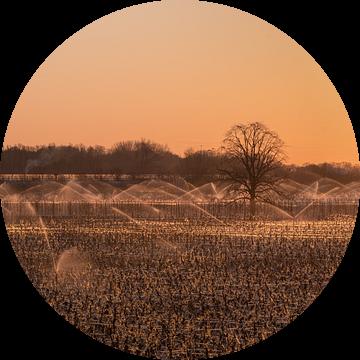 Beregenen fruitboomgaard Beesd van Moetwil en van Dijk - Fotografie