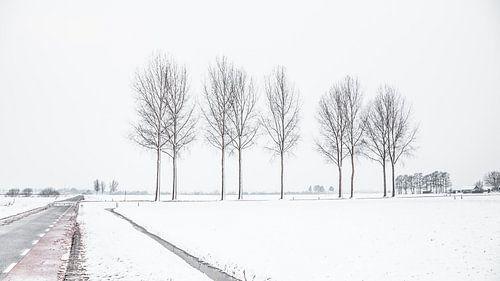 Nederlands sneeuwlandschap met weg en bomen