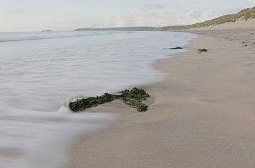 Algen am Strand von