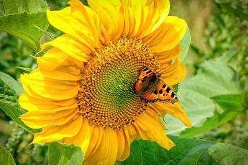 Vlinder op Zonnebloem van eric van der eijk