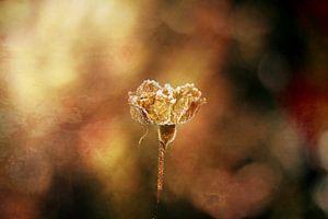 gouden licht in de winter van